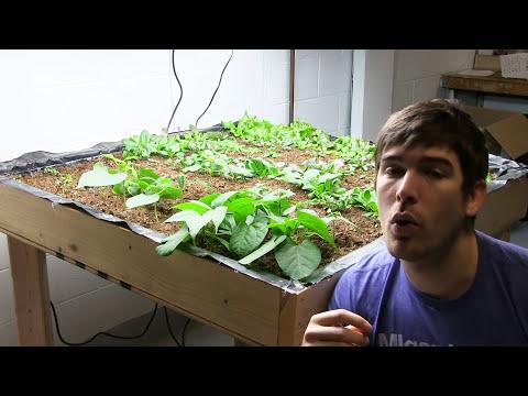 My Top 3 Plants To Grow When Indoor Gardening