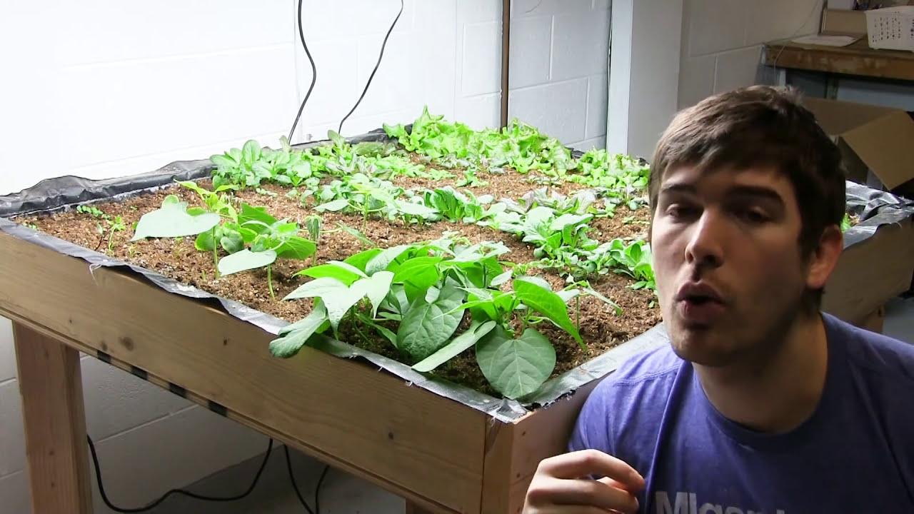 My top 3 plants to grow when indoor gardening youtube for Indoor gardening images