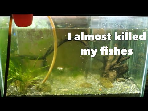 ACCIDENT while Cleaning my Aquarium | Wildly Indian