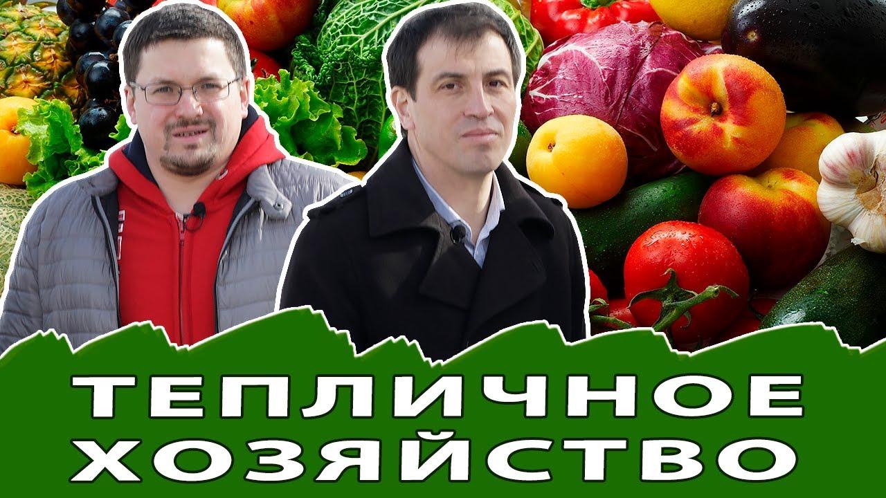 Как зарабатывать на выращивании овощей