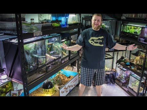 March Reptile Room TOUR! 2019