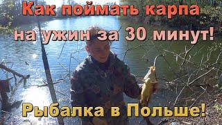 Иду после работы поймать карпа на ужин Рыбалка в Польше Карп на боковой кивок