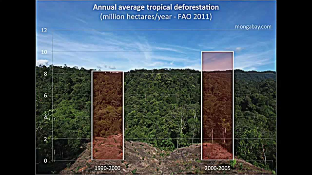 urbanisation and deforestation Start studying malaysian rainforest - show causes and impacts of deforestation learn vocabulary, terms, and more with flashcards, games, and other study tools.