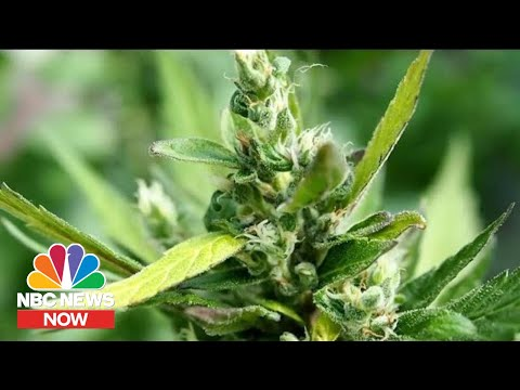 How New Hemp Laws Are Impacting Crime | NBC News Now