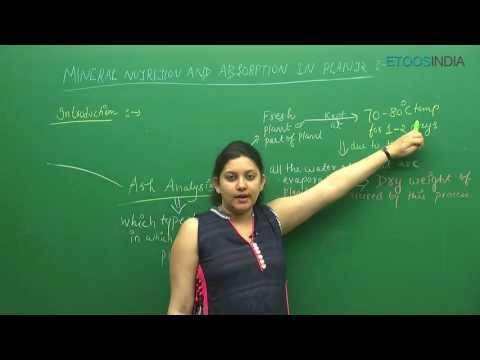 Mineral Nutrition I Shivani Bhargava (SB) Mam From ETOOSINDIA.COM