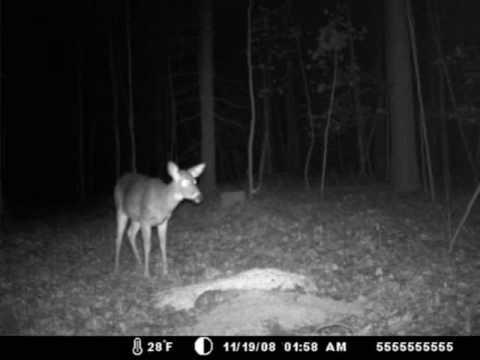 Deer Trail Cam Photos , Connecticut Bucks/Dancing Deer