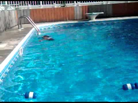 7 year old boy diving in 10 foot deep pool youtube for 10 ft garden pool