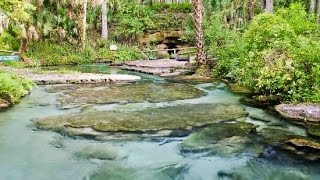 Kelly Park Rock Spring Florida  Where to go in Orlando Area outside of theme parks.
