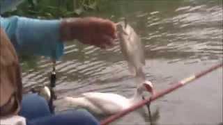 Pesca de Tilápia - Represa Billings
