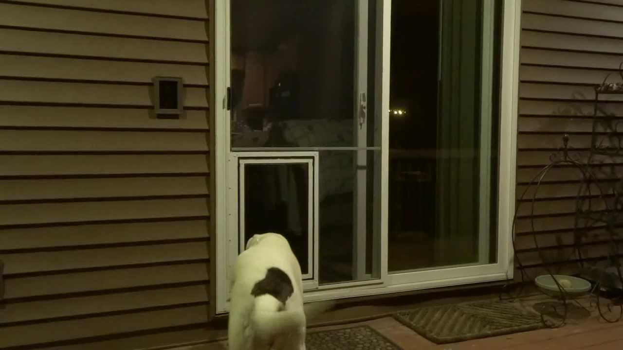 security door with dog door online