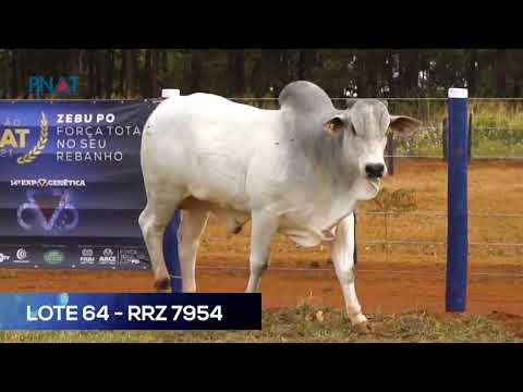 LOTE 64 - RRZ7954 - NELORE