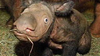 Australian Strange Creatures UNSOLVED MYSTERIES  720P