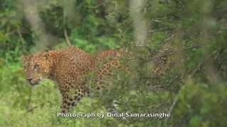 Yala National Park, Sri Lanka: 2014