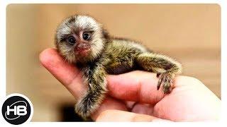 10 САМЫХ МАЛЕНЬКИХ ЖИВОТНЫХ В МИРЕ. Самые Маленькие Животные в Мире