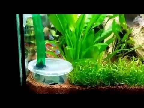 Кормушка аквариумных рыб своими руками
