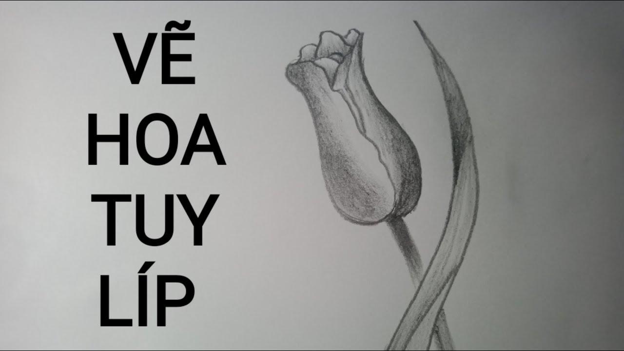 Vẽ Hoa Tuy Líp Đơn Giản – Tulip drawing