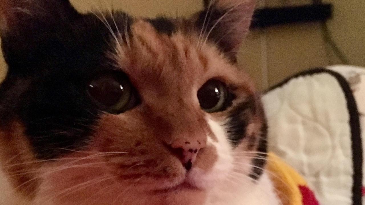 Asher Cat Live Stream