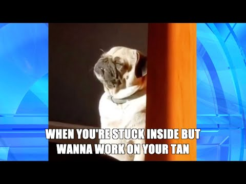 This Dog Perfect Sums Up Your Feels in 'Thank GIF It's Friday'