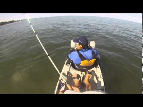 Shallow water fishing for rockfish at point lookout state for Md fishing report point lookout