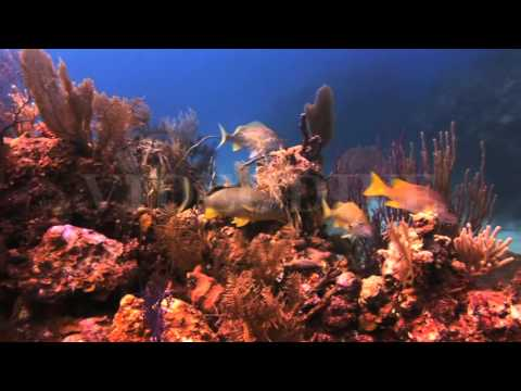 underwater-coral-reef-and-tropical-fish-in-bahamas