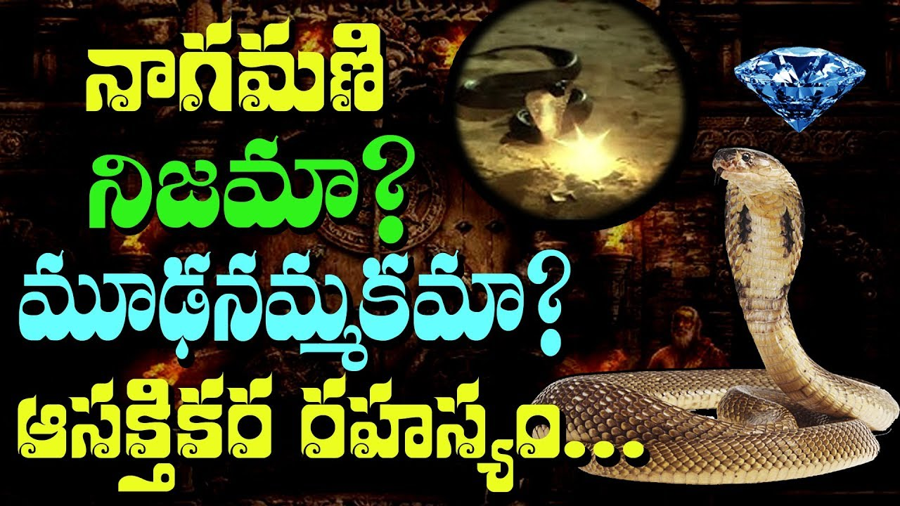 SHOCKING!! The Origin of NAGAMANI in Cobras || Rectv