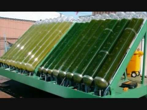 Algae as a Fuel Source