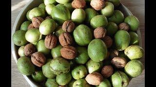 собрал урожай грецких орехов