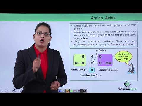 Biomolecules - Protein -  Amino Acids