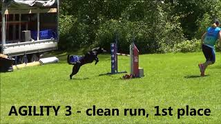 Vigi  World Cup Agility Dutch shepherds 2018