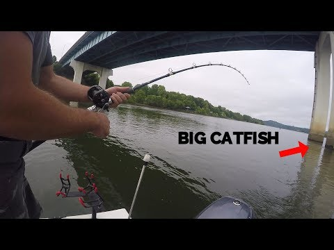 BIG CATFISH And A SURPRISE FISH Under A Bridge