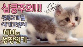 [심쿵주의] 귀여운 아기 고양이 키우기 (비비의 육아일기)