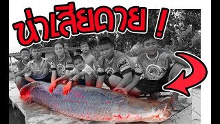 งานเข้า ช่อนยักษ์ 100 กิโลกรัม   เด็กตกปลา