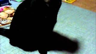 秋川雅史さんの歌声にものすごく緊張しています 猫といえども、何か感じ...