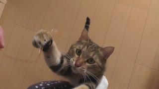 猫とたまごパック