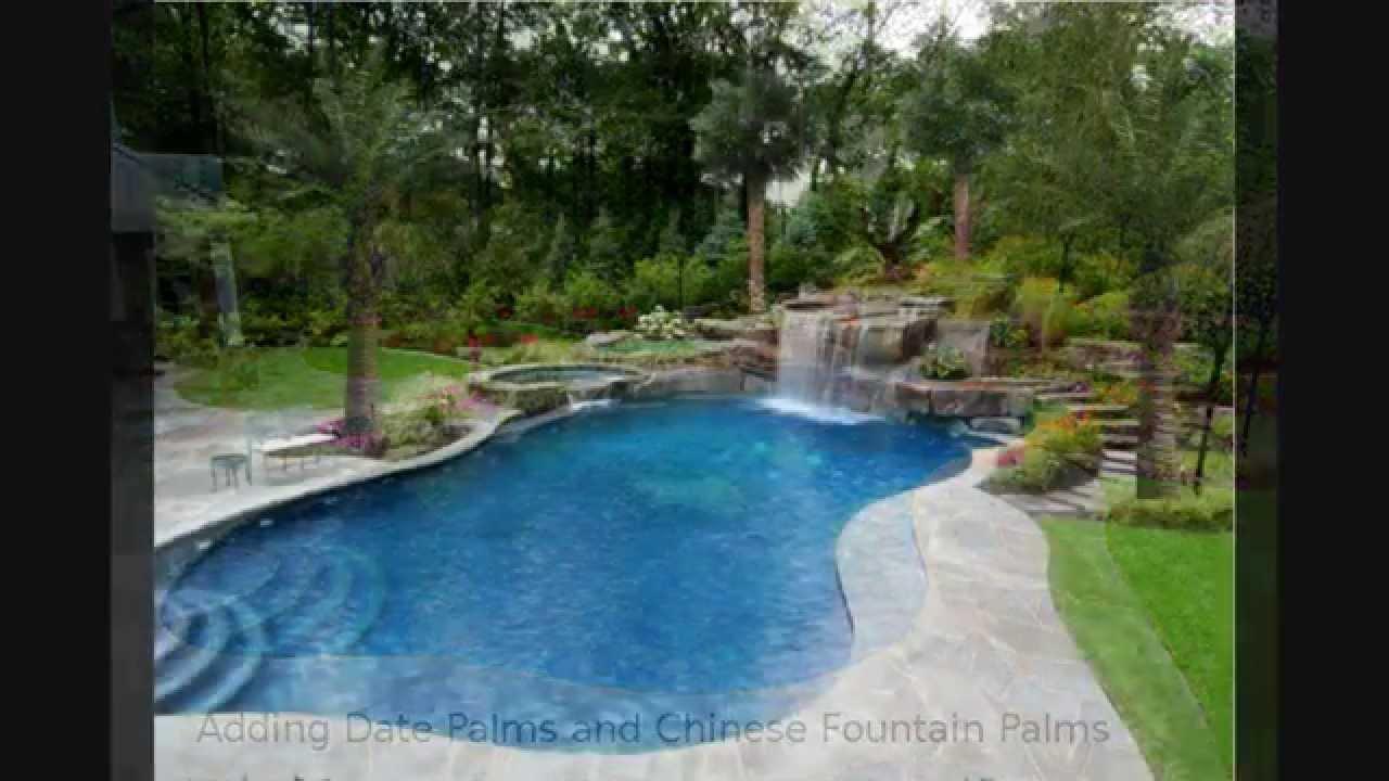 sale palm tree landscape houston dallas san antonio texas youtube