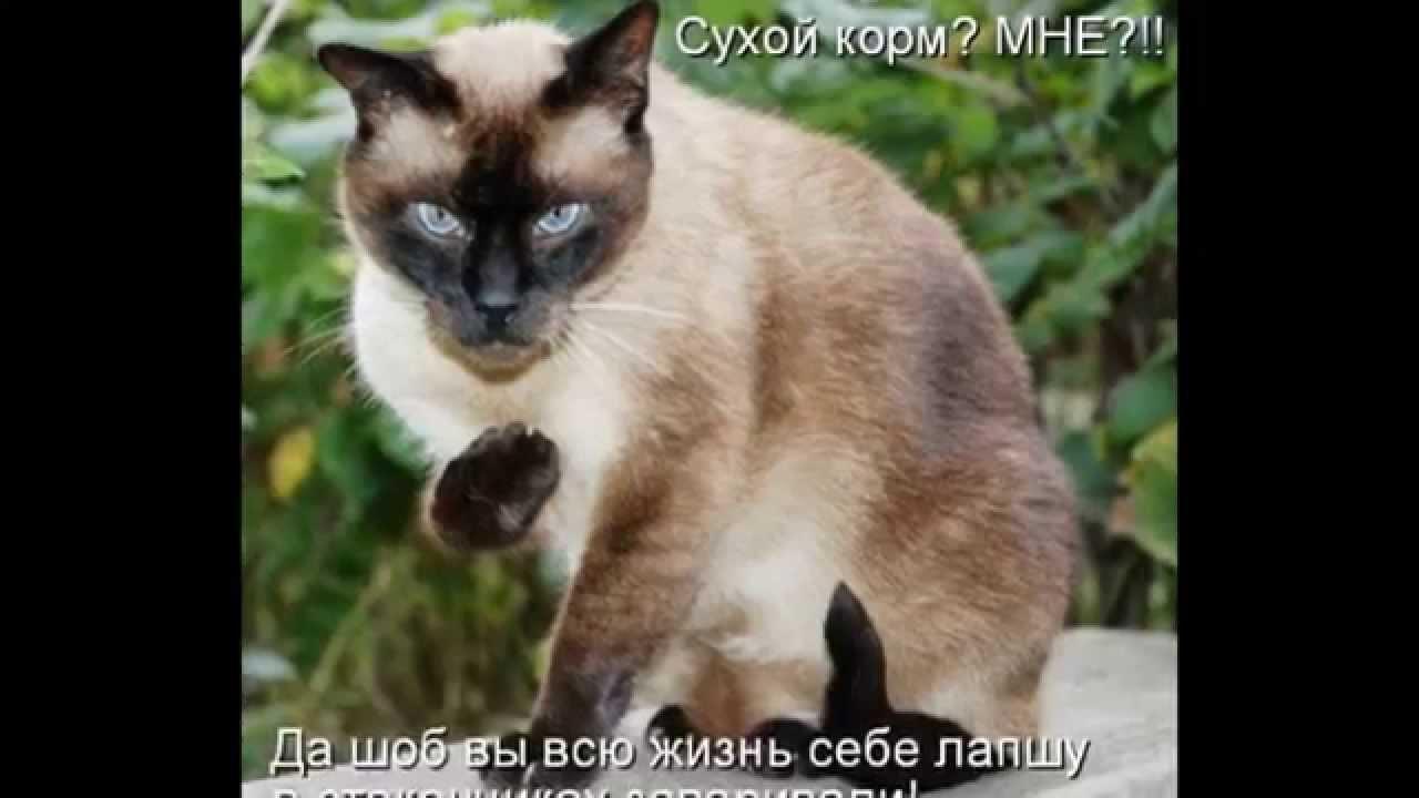 Прикольные картинки котов с надписями. - YouTube