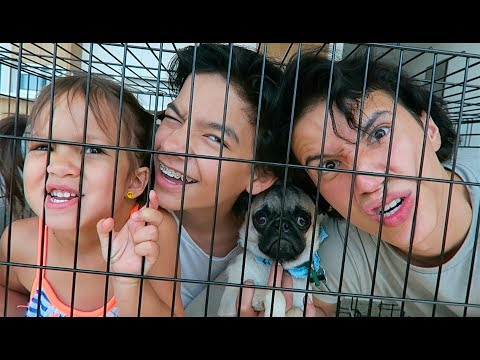Thumbnail: FAMILY DOG CRATE CHALLENGE!!