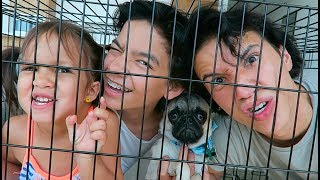 FAMILY DOG CRATE CHALLENGE!!