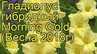 Гладиолус гибридный (Morning Gold). Краткий обзор, описание характеристик, где купить луковицы