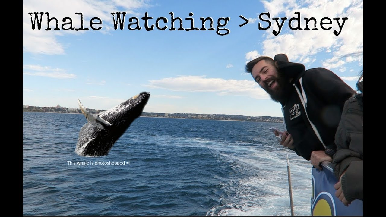 Lets Go Whale Watching || SYDNEY