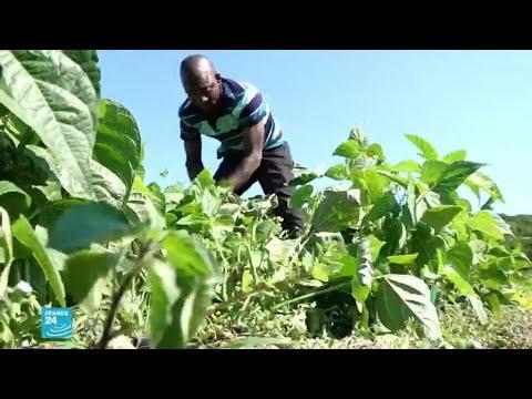 ريبورتاج: بعد استغلالهم في الحقول... مهاجرون أفارقة يخلقون تعاونية للإنتاج الزراعي في إيطاليا  - 11:58-2020 / 7 / 10