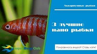 """3 лучшие рыбки для нано аквариума: бадис красный """"Скарлет"""", элассома Эвергладей, гуппи Эндлера"""