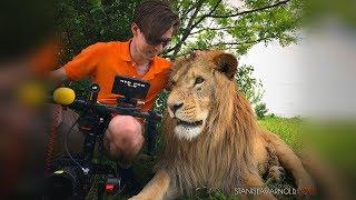 Сафари Парк Львов Тайган - Мой Крым, куда поехать в Крыму / Lions Safari Park Taygan in Crimea