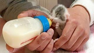 頑張ってミルクを飲む4匹の赤ちゃん猫