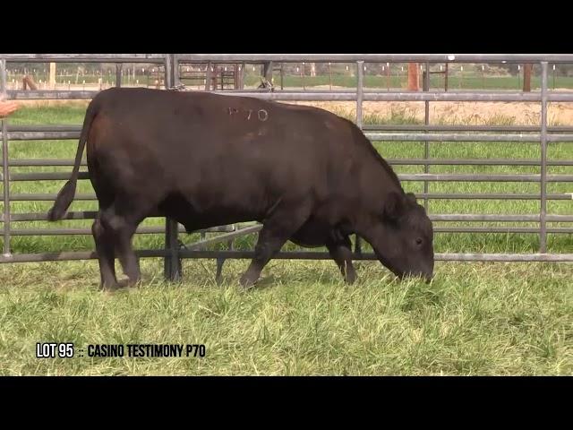 Dal Porto Livestock and Rancho Casino Lot 95