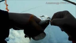 Рибалка Суйсарь Три Кайфові хвилини Three minutes of fun