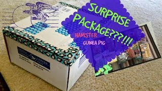 SURPRISE Package! from The Cavy House (Hamster + Guinea Pig) Thumbnail
