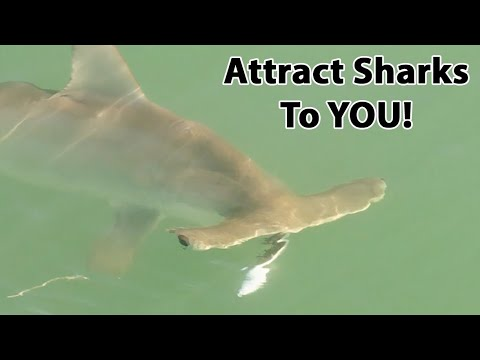 Shark Fishing On Demand: The Best Way To Catch Sharks Fast!