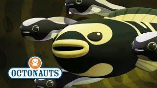 Octonauts Season 4 Exclusive Convict Fish
