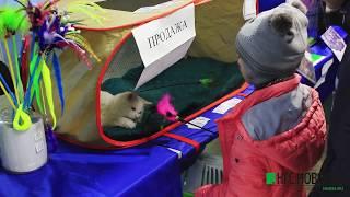 Выставка кошек «Именины Доброго кота» в Омске